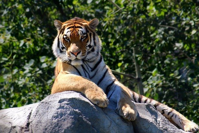 Pet Tiger as Lifestyle Inflation